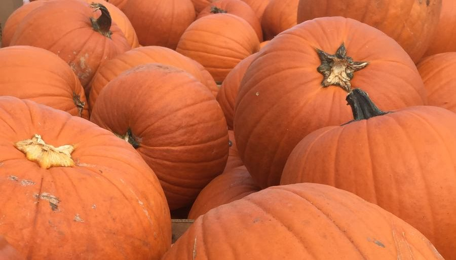 Check Out These Houston Fall Celebrations