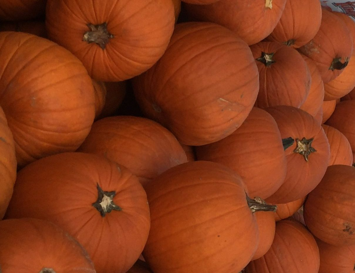 Read more about the article Pumpkin Spice Season in Houston
